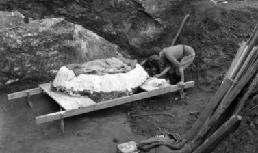 This photograph shows the famous Tabun Neanderthal skeleton being prepared for removal from the site for further study. 1932. (Copyright Pitt Rivers Museum, University of Oxford. Accession Number: 1998.294.344)