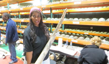 National Museum of Namibia curator Nzila M. Libanda-Mubusisi with one of the elephant tusks during sampling. Photo by: Judith Sealy