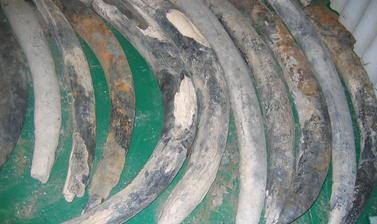 Elephant ivory cargo in the storeroom of the Oranjemund mine. Photo by: Shadreck Chirikure