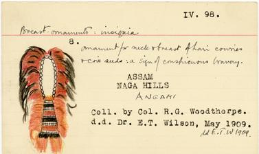 Catalogue index card for an Angami Naga neck and breast ornament: 'Ornament for neck & breast of hair[,] cowries & coix seeds: a sign of conspicuous bravery.'