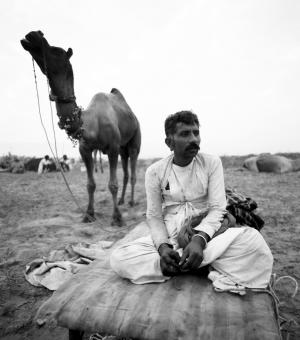 Camel and man